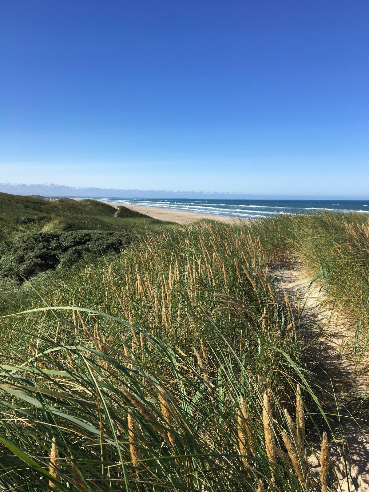 Strandurlaub_in_Dänemark_Dünen