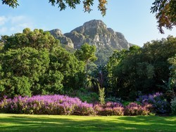 Kapstadt-BotanischerGarten-Kirstenbosch