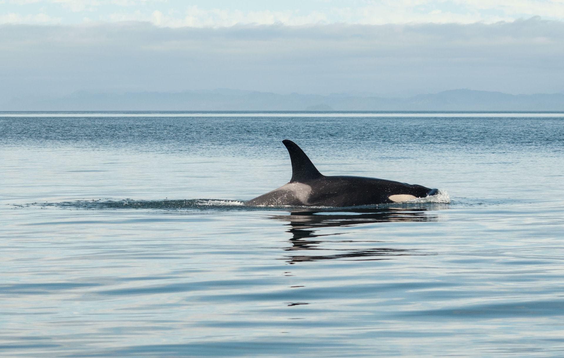 Hokkaido-Whale-watching