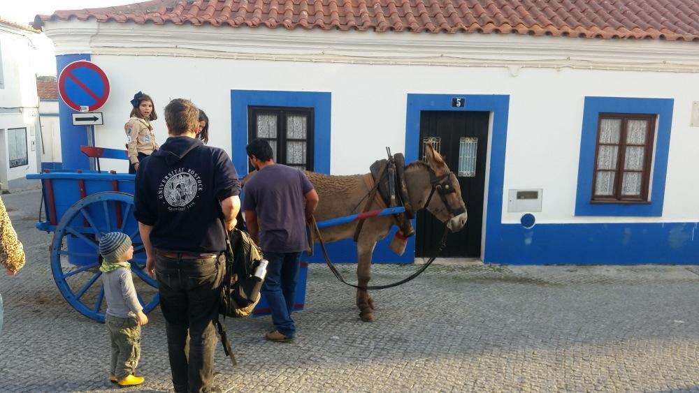Portugal-Esel
